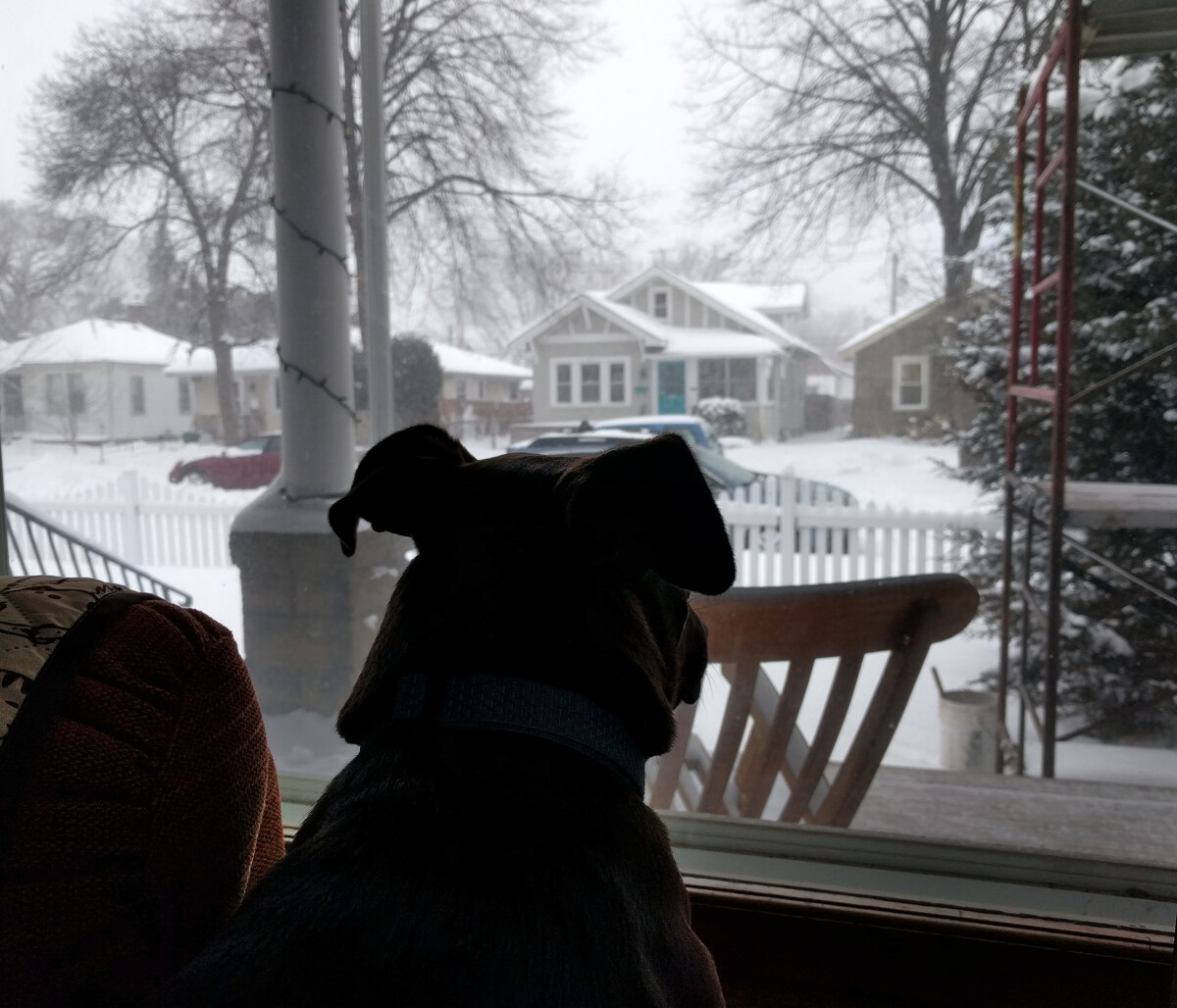 Photo of Rigby the dog watching snow outside the window with construction scaffolding in the background