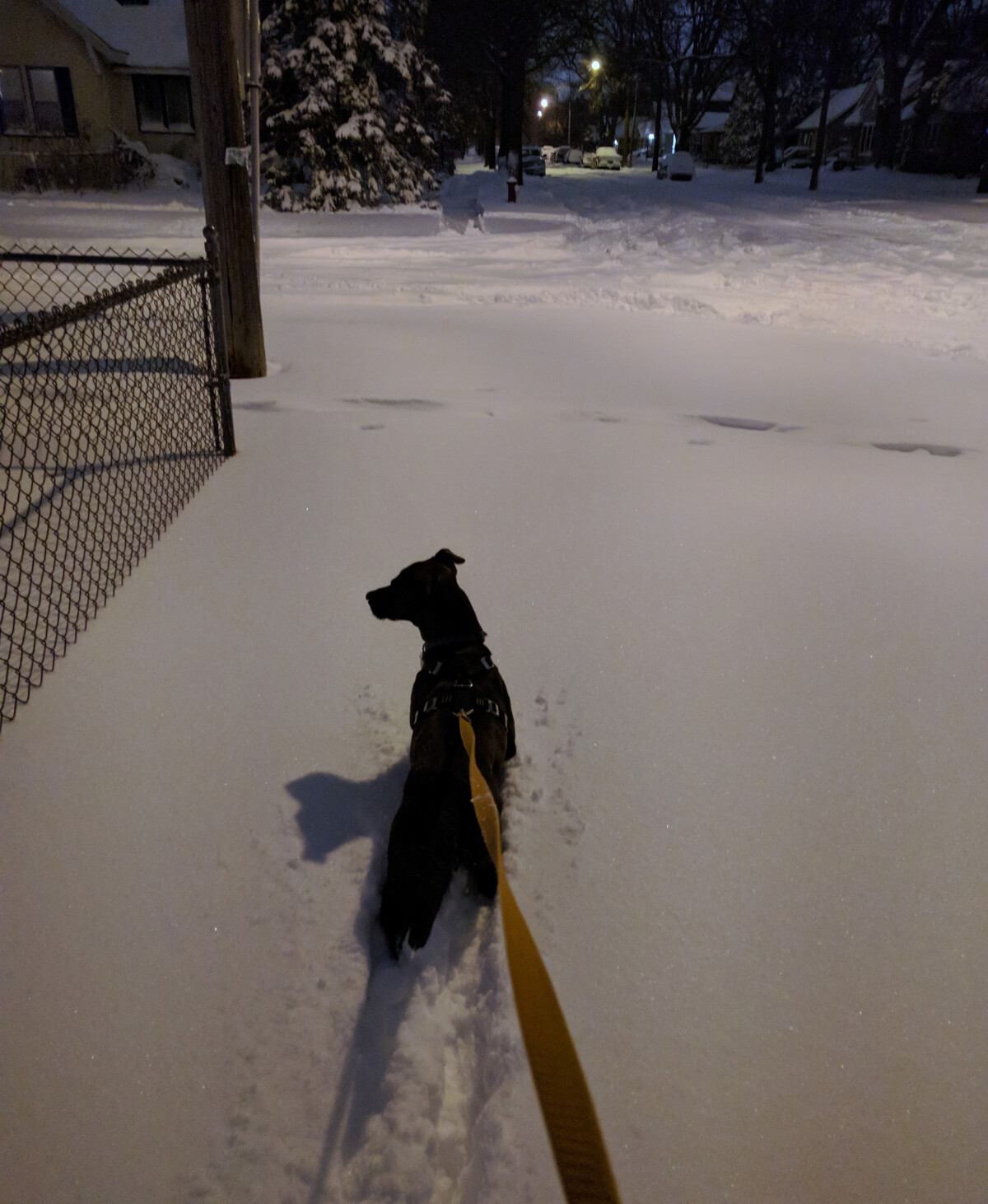 Photo of Rigby the dog in deep snow