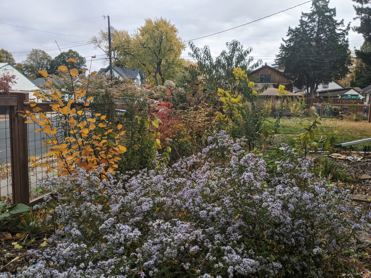 Fall foliage and blooms in the rain garden