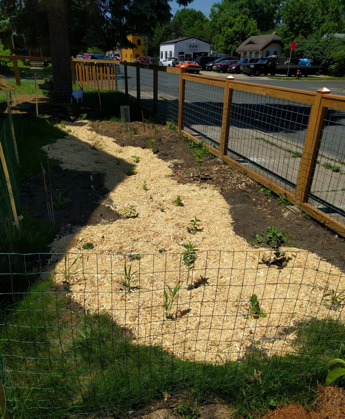 Rain garden with new plants and mulch